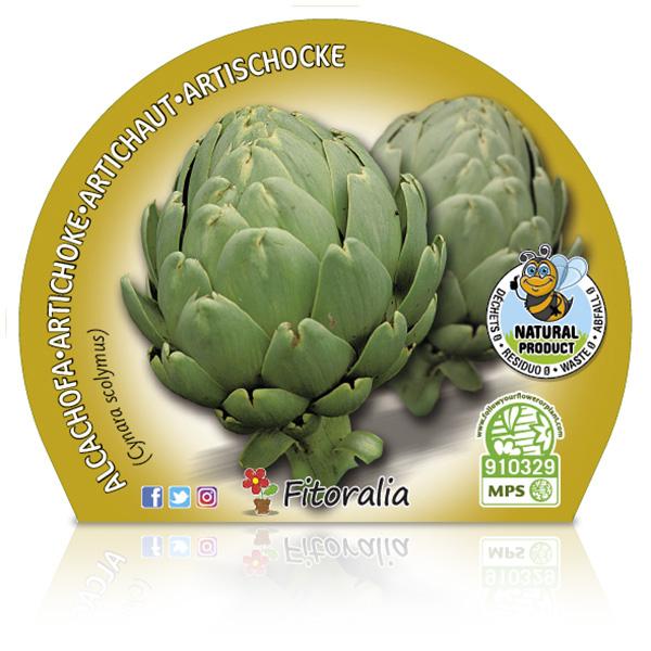 Alcachofa M-10,5