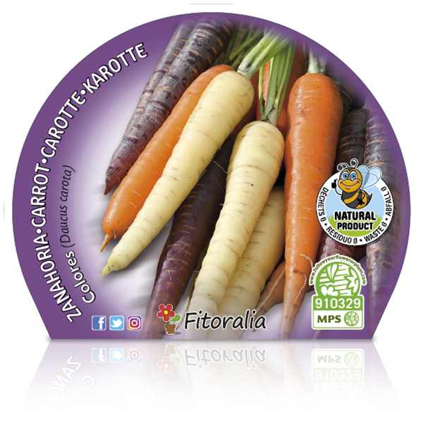 Zanahoria Colores M-10,5
