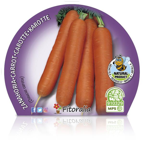 Zanahoria M-10,5