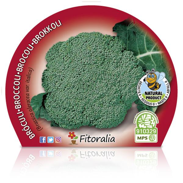 Brócoli M-10,5