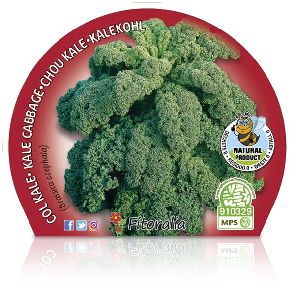 Col Kale M-10,5