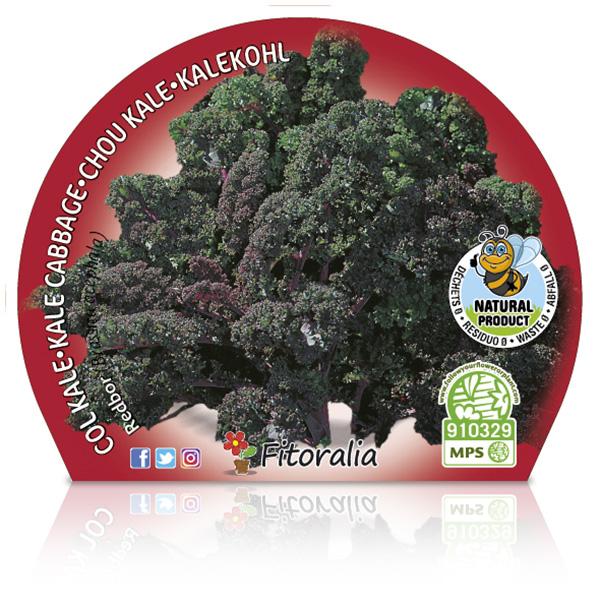 Col Kale Morada M-10,5