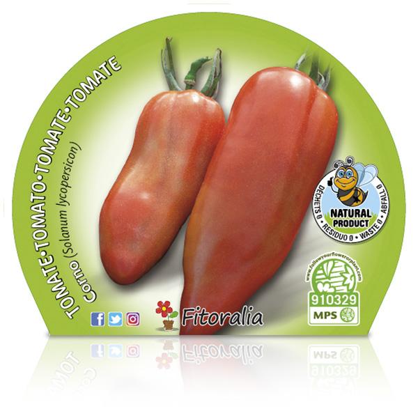 Tomate Corno M-10,5