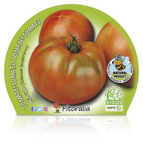 Tomate Ensalada Híbrido M-10,5