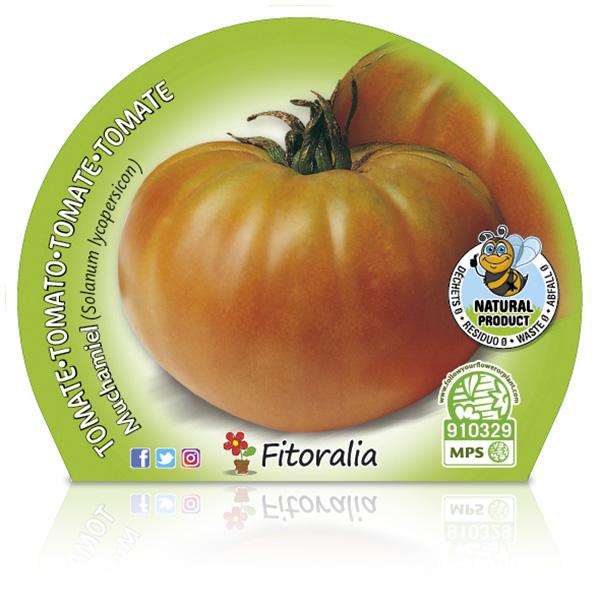Tomate Muchamiel M-10,5