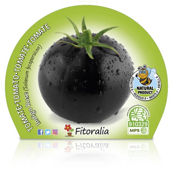 Tomate Negro Indigo Rose M-10,5