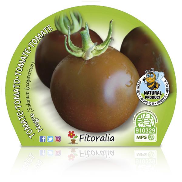 Tomate Negro M-10,5