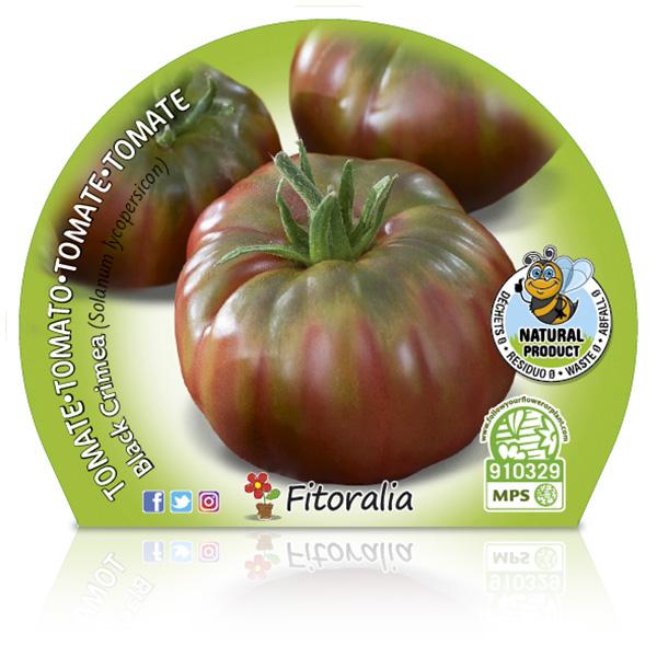 Tomate Negro de Crimea M-10,5