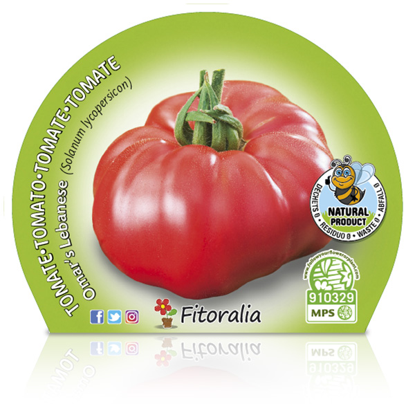 Tomate Omar Lebanese M-10,5