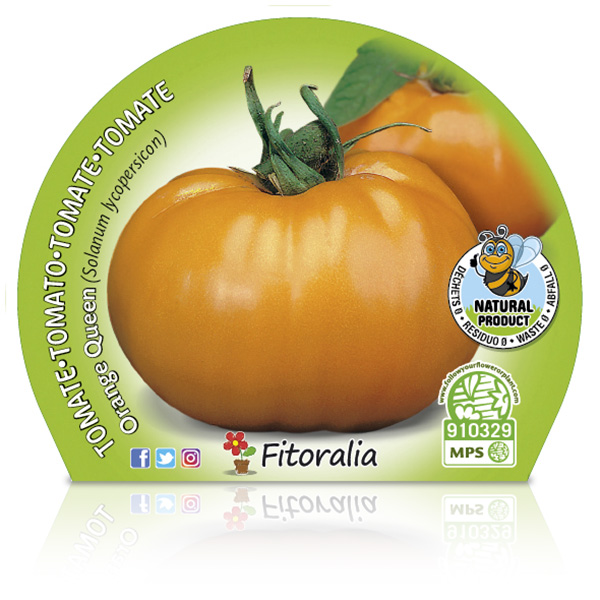 Tomate Orange Queen M-10,5