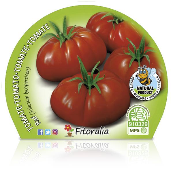 Tomate Raf M-10,5