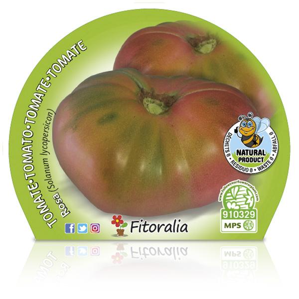 Tomate Rosa M-10,5