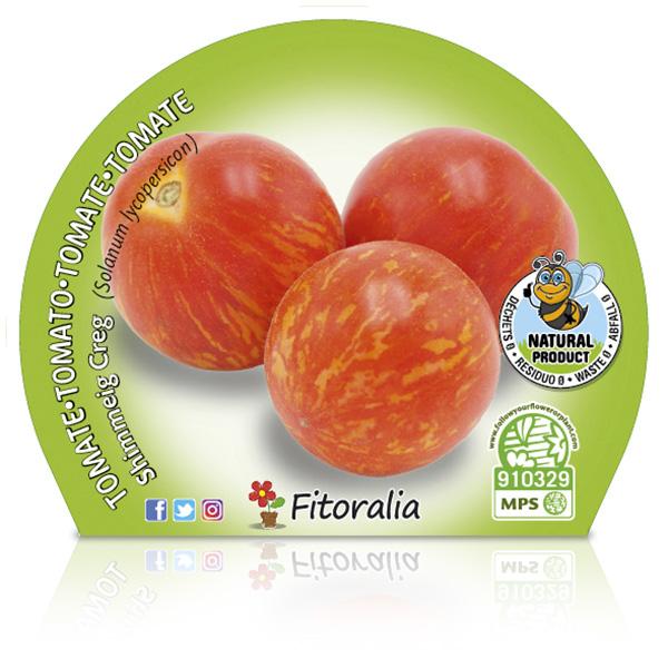 Tomate Shimmeig Creg M-10,5