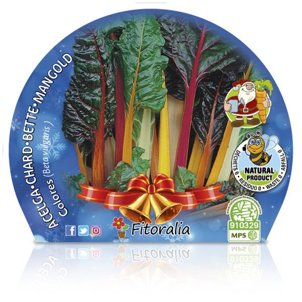 Acelga Colores Navidad M-10,5 Beta vulgaris