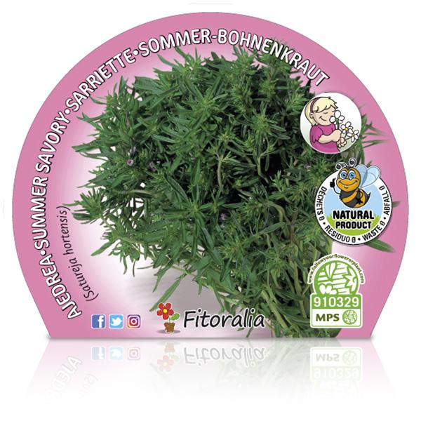 Ajedrea M-10,5 Satureja hortensis W
