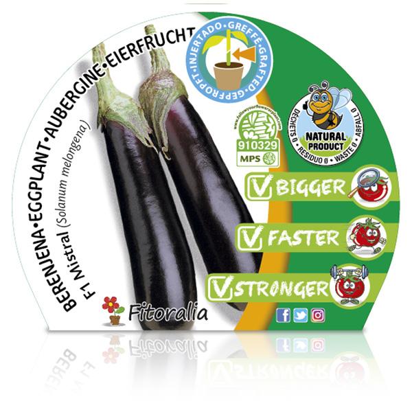 Berenjena Injertada F1 Mistral M-10,5 Solanum melongena W
