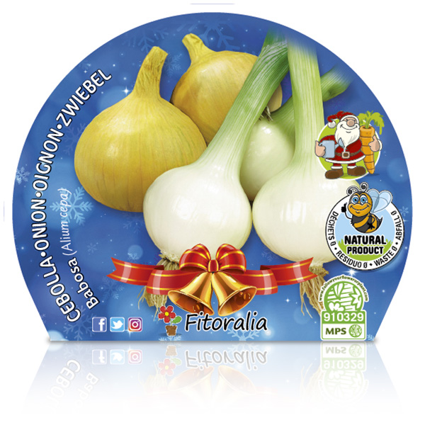 Cebolla Babosa Navidad M-10,5 Allium cepa