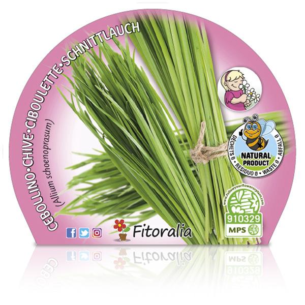Cebollino M-10,5 Allium schoenoprasum W