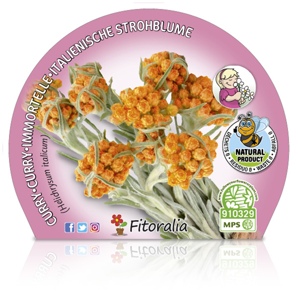Curry M-10,5 Helichrysum italicum W
