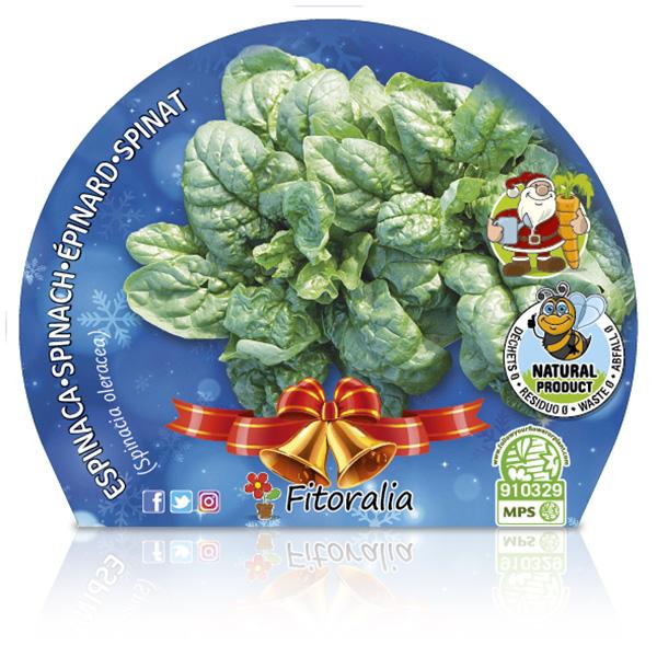 Espinaca Navidad M-10,5 Spinacia oleracea