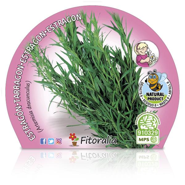 Estragón M-10,5 Artemisia dracunculus W