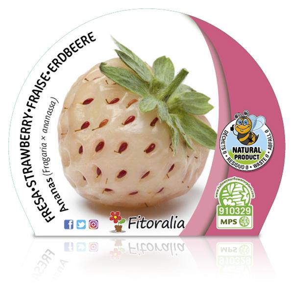 Fresa Ananas M-10,5 Fragaria × ananassa W