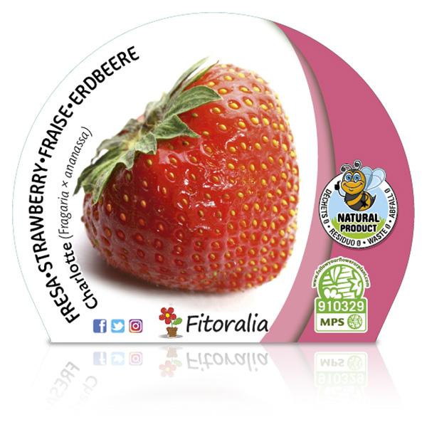 Fresa Charlotte M-10,5 Fragaria × ananassa W