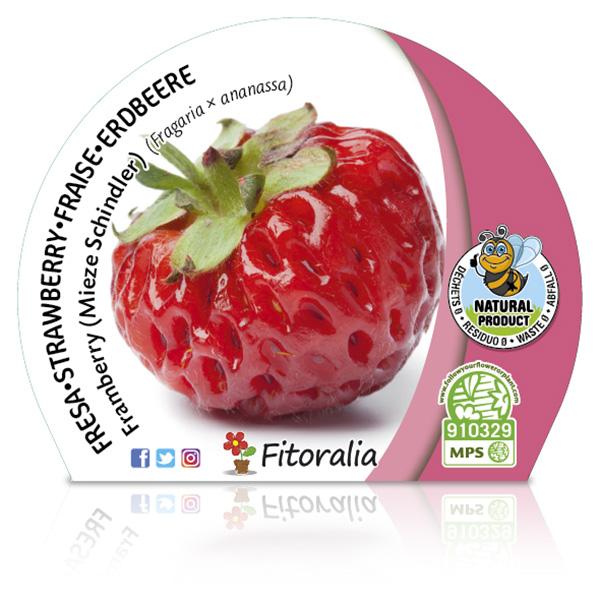 Fresa Framberry M-10,5 Fragaria × ananassa W