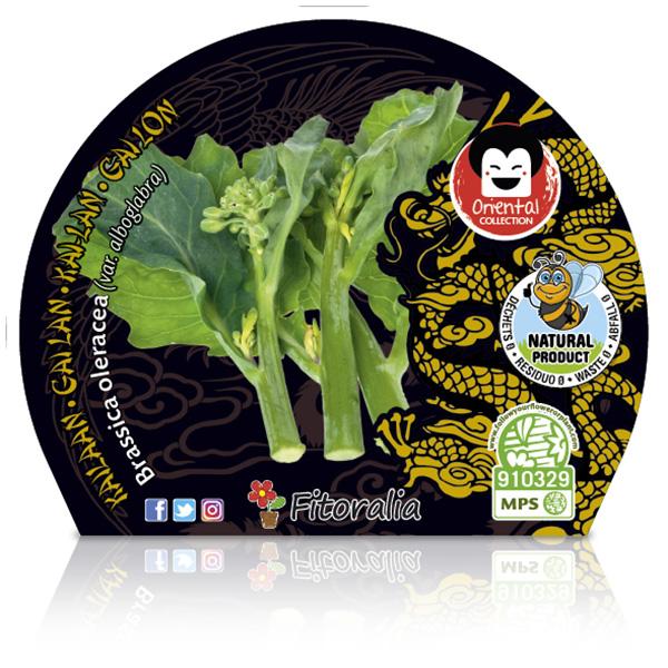 Kailaan M-10,5 Brassica oleraceavar.alboglabra W