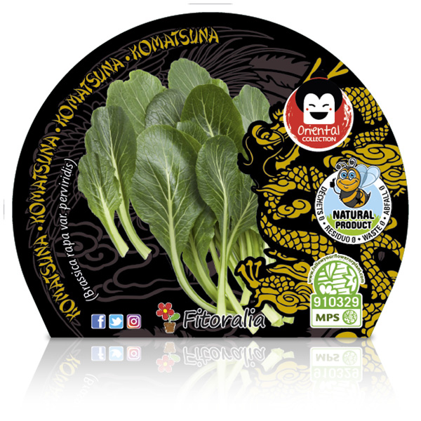 Komatsuna M-10,5 Brassica rapavar.perviridis W
