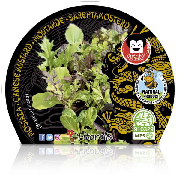 Mostaza M-10,5 Brassica juncea W