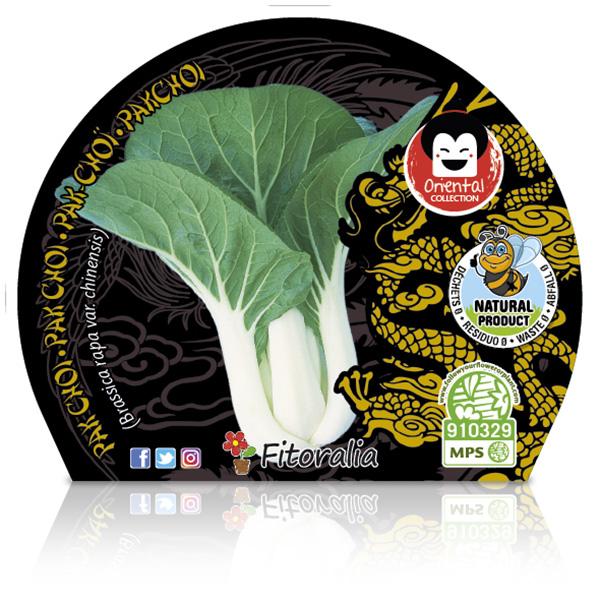 Pak Choi M-10,5 Brassica rapa var. chinensis W