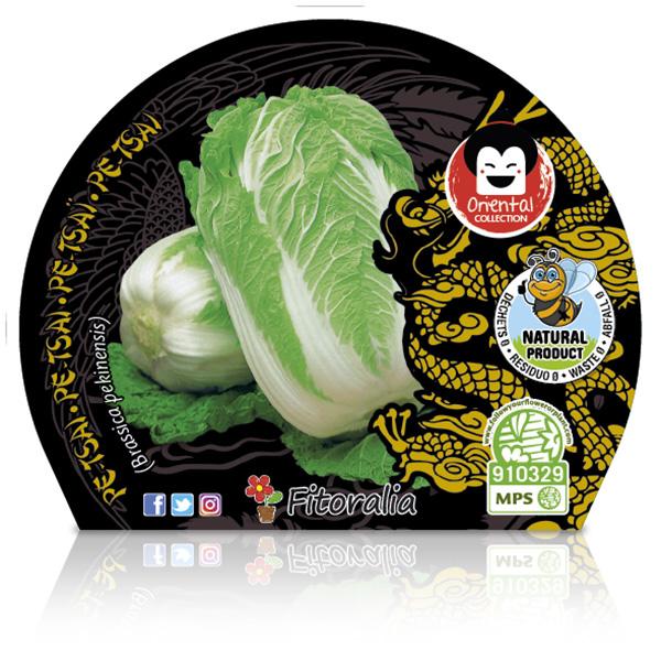 Pe-Tsai M-10,5 Brassica pekinensis W