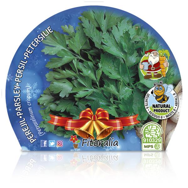 Perejil Navidad M-10,5 Petroselinum crispum