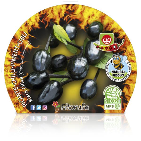 Picante Black Olive M-10,5