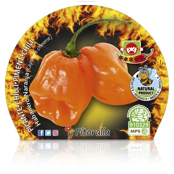 Picante Habanero Naranja M-10,5