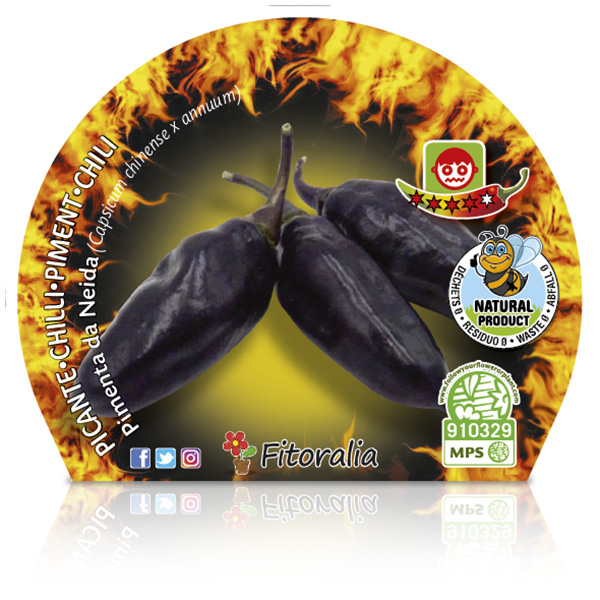 Picante Pimenta Da Neyde M-10,5