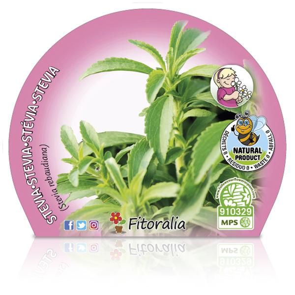 Stevia M-10,5 Stevia rebaudiana W