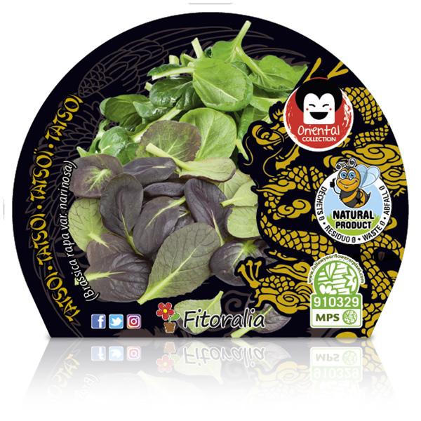 Tatsoi M-10,5 Brassica rapa var. narinosa W