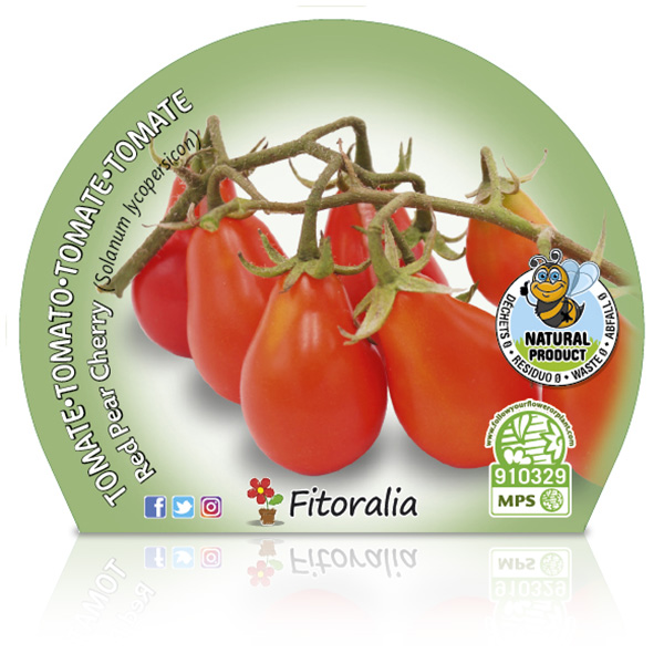 Tomate Cherry Red Pear M-10,5