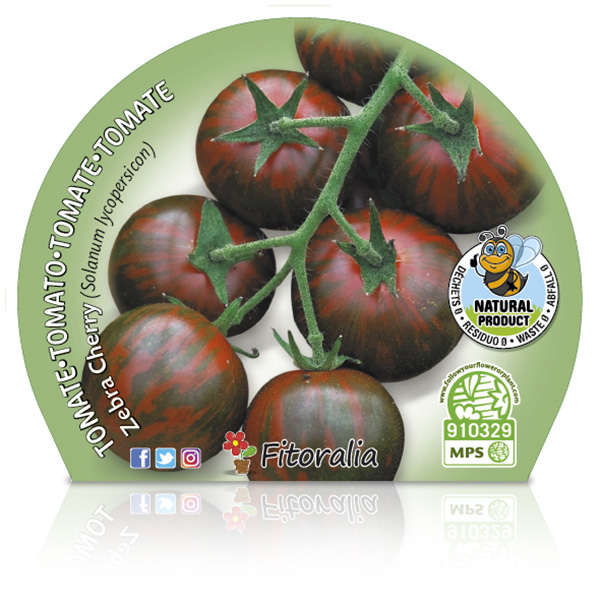 Tomate Cherry Zebra M-10,5