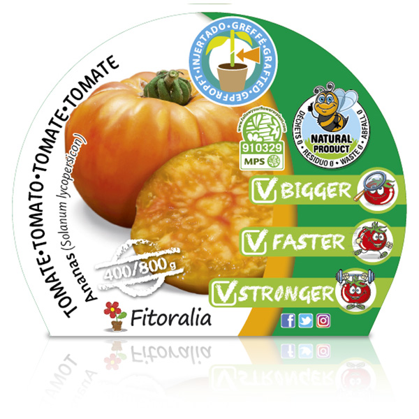 Tomate Injertado Ananas M-10,5 Solanum lycopersicum W