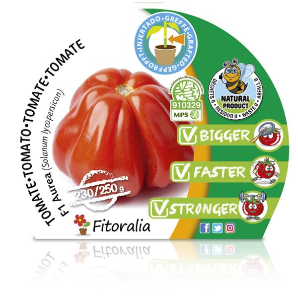 Tomate Injertado F1 Aurea M-10,5 Solanum lycopersicum W