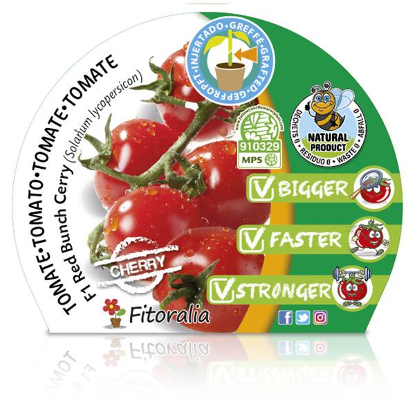 Tomate Injertado F1 Cherry Red Bunch M-10,5 Solanum lycopersicum W