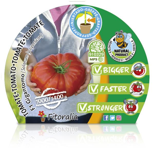 Tomate Injertado F1 Gigantomo M-10,5 Solanum lycopersicum W
