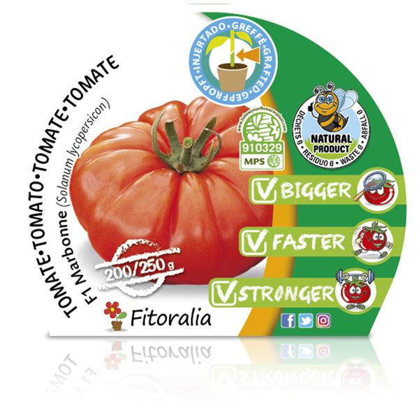 Tomate Injertado F1 Marbonne M-10,5 Solanum lycopersicum W