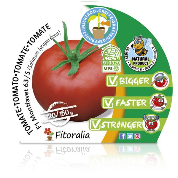 Tomate Injertado F1 Montfavet 63-5 M-10,5 Solanum lycopersicum W