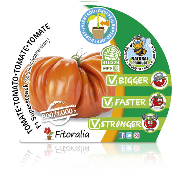 Tomate Injertado F1 Supersteack M-10,5 Solanum lycopersicum W