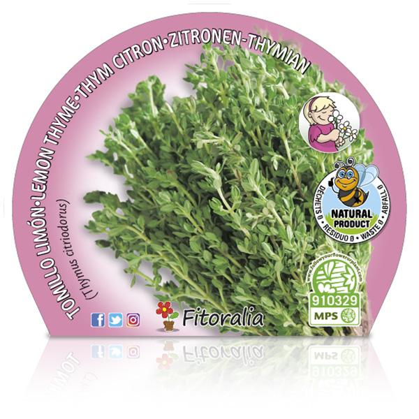 Tomillo Limón M-10,5 Thymus citriodorus W