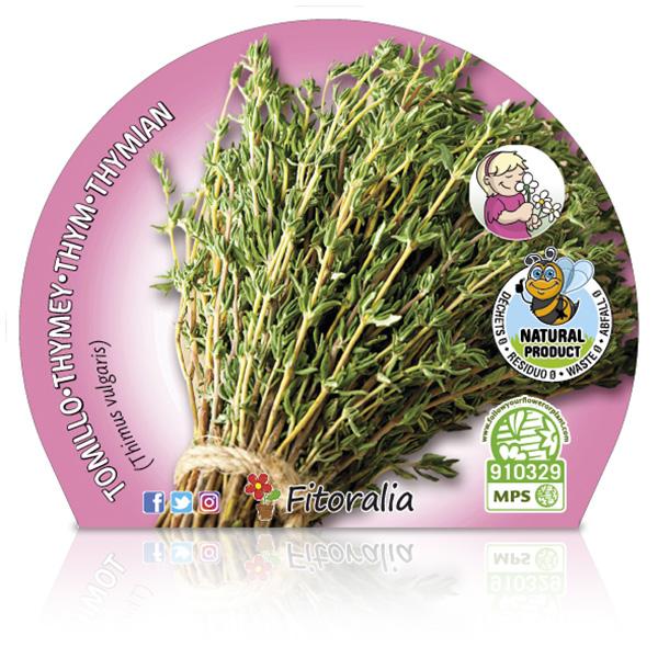 Tomillo M-10,5 Thymus vulgaris W